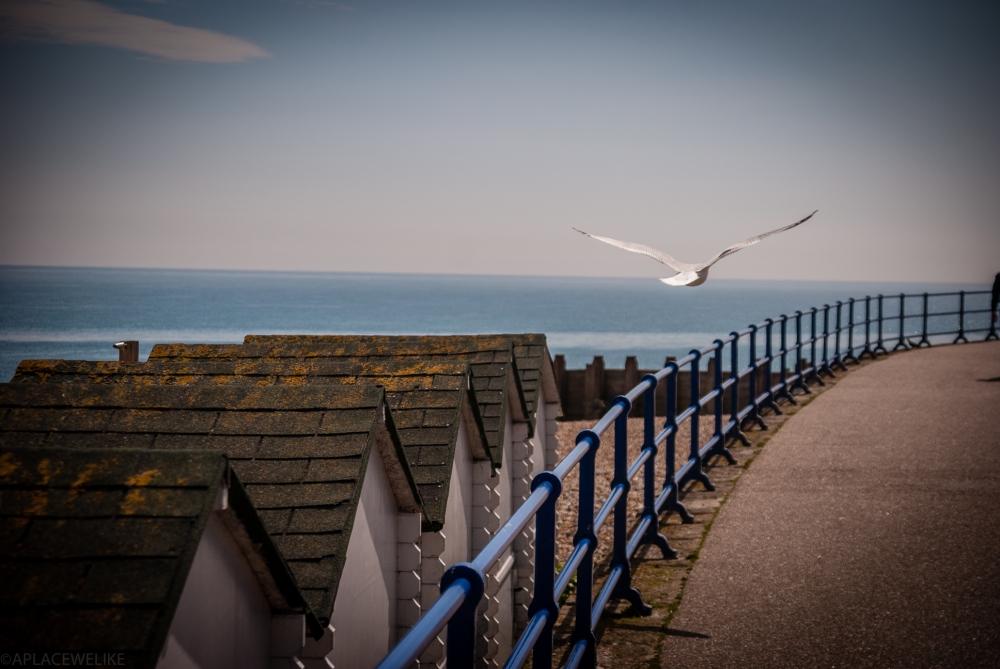 Eastbourne12